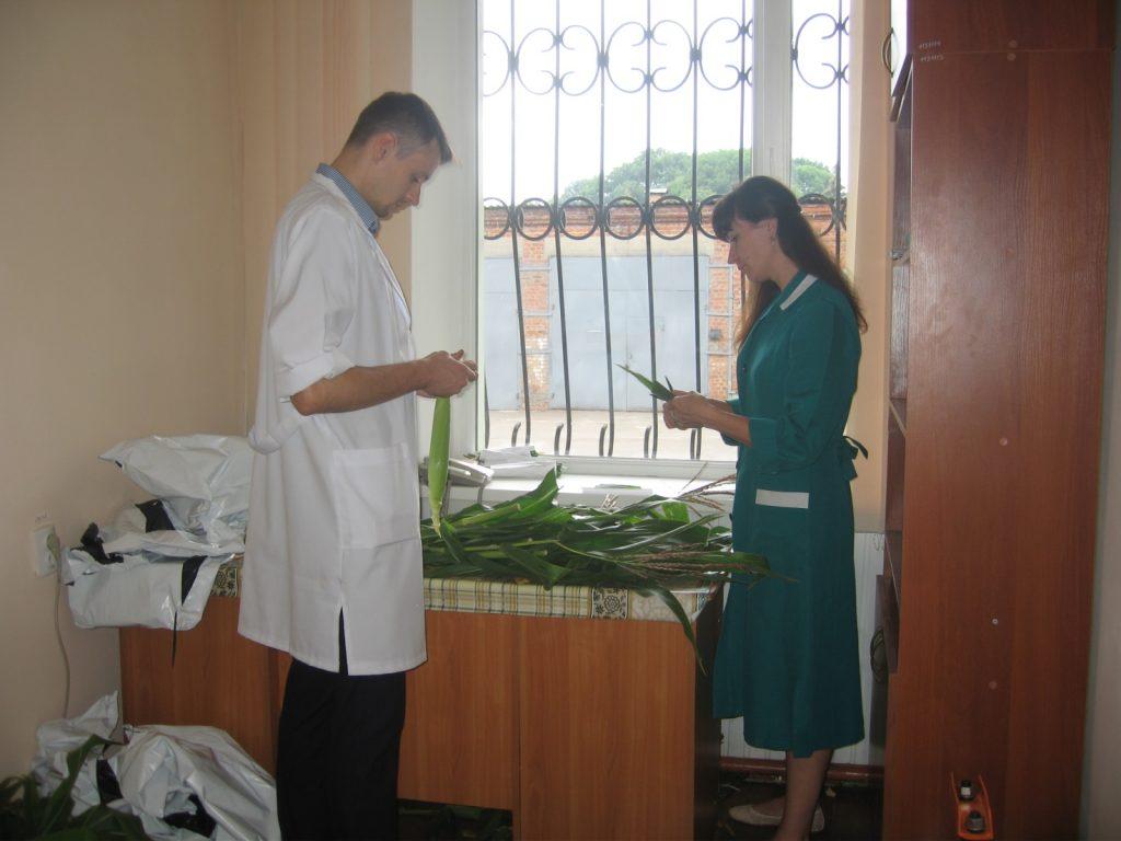 Розбір зразків кукурудзи проводять ентомолог Винокуров О. О. та міколог Павлущенко Л.О