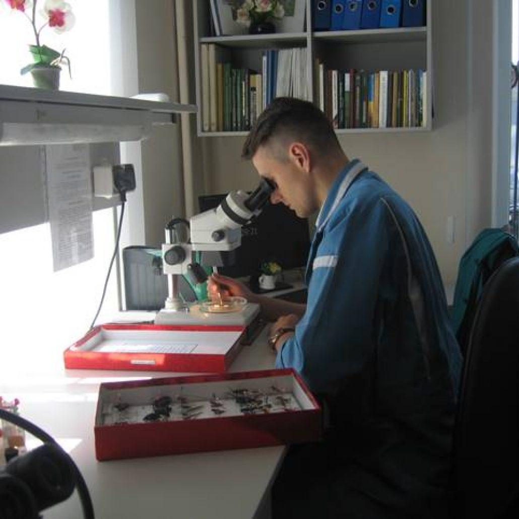 Оновлення ентомологічної колекції стовбурних шкідників лісу (вусачів)  (ентомолог Винокуров О. О. )