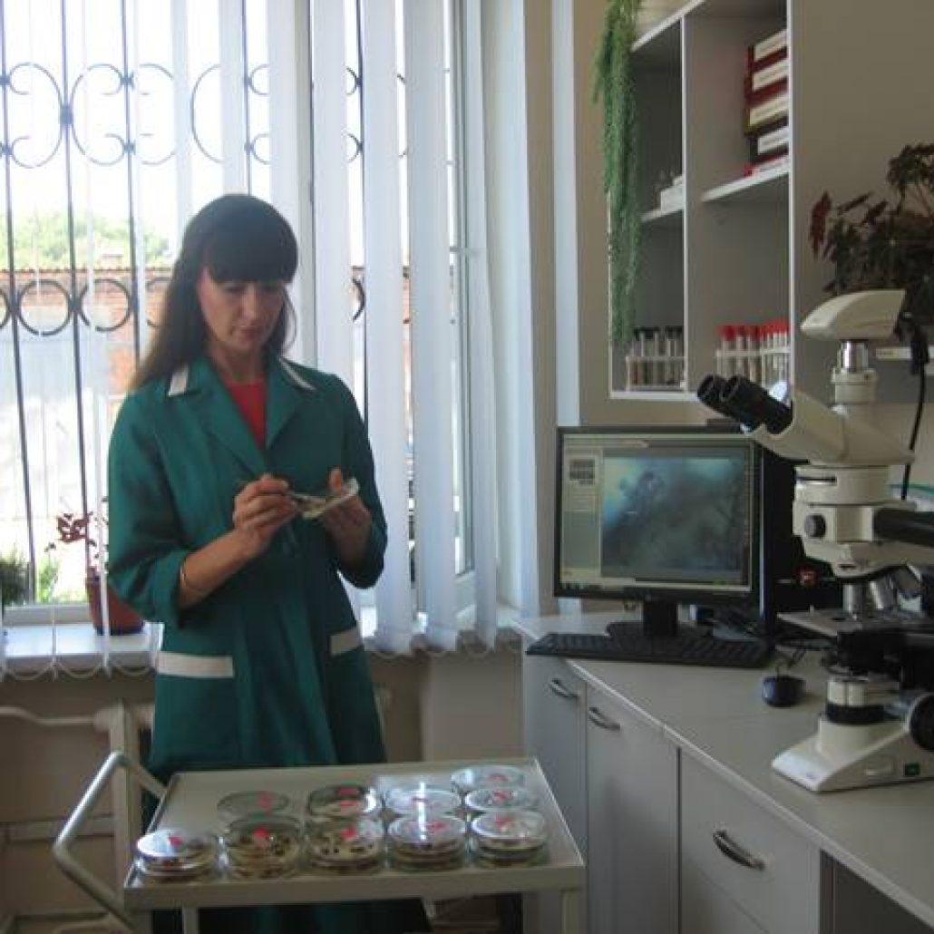 Мікологічний аналіз зразків рослин кукурудзи після витримування їх у вологій камері  (міколог Павлущенко Л. О.)