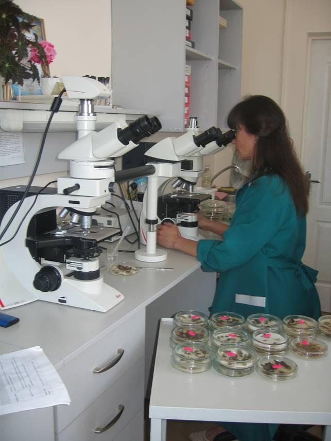 Мікроскопічний метод мікологічного аналізу (міколог Павлущенко Л. О.)