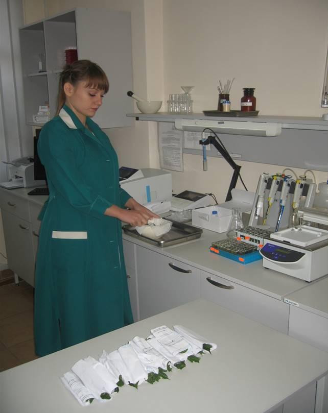 Підготовка зразків сої до проведення бактеріологічного аналізу методом ІФА (бактеріолог Романюк Д. В.)